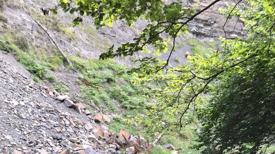 ARCA denuncia a la CHC el vertido de troncos en el cauce del río Magdalena