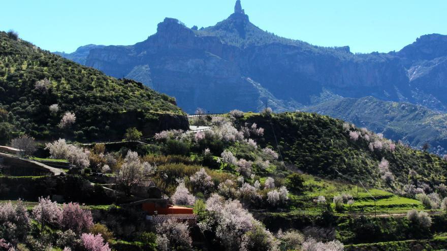 Almendro en Flor en Gran Canaria. Foto: Cirenia Vico