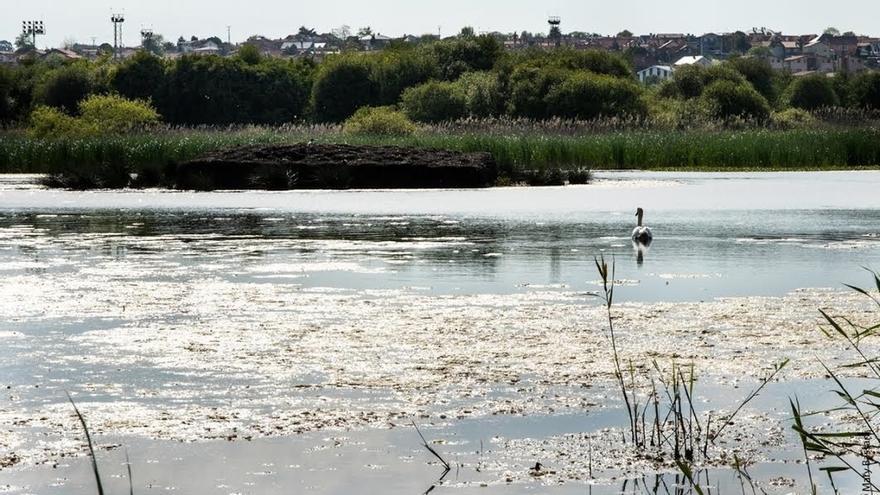 National Geographic sitúa la reserva ornitológica de las Marismas Blancas entre los 10 santuarios de aves de España