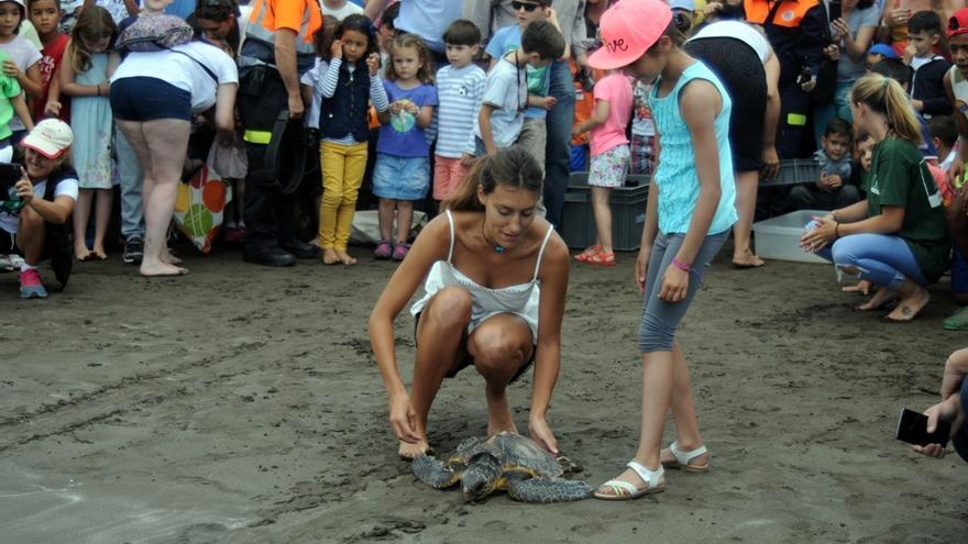 Cinco tortugas vuelven al mar en el barrio de San Cristóbal de Las Palmas de Gran Canaria.