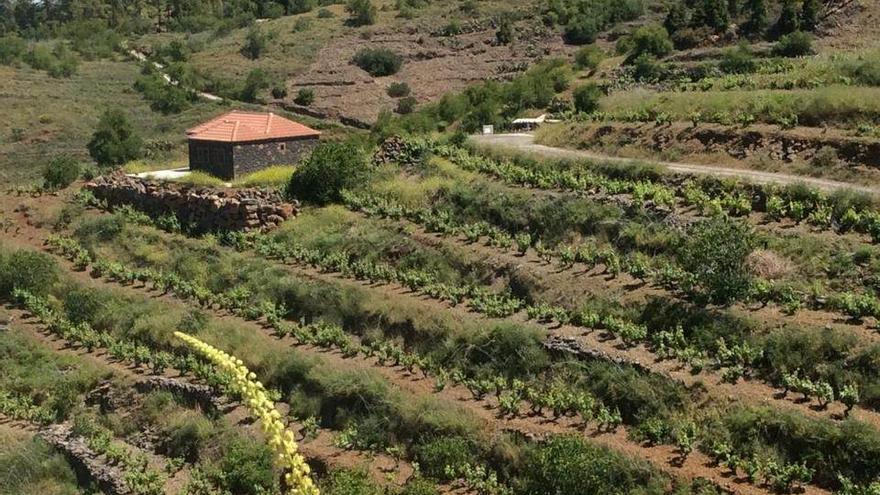 El cultivo en bancales recibe compensaciones públicas a través de esa herramienta