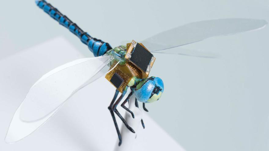 El proyecto DragonflEye busca convertir a las libélulas en drones