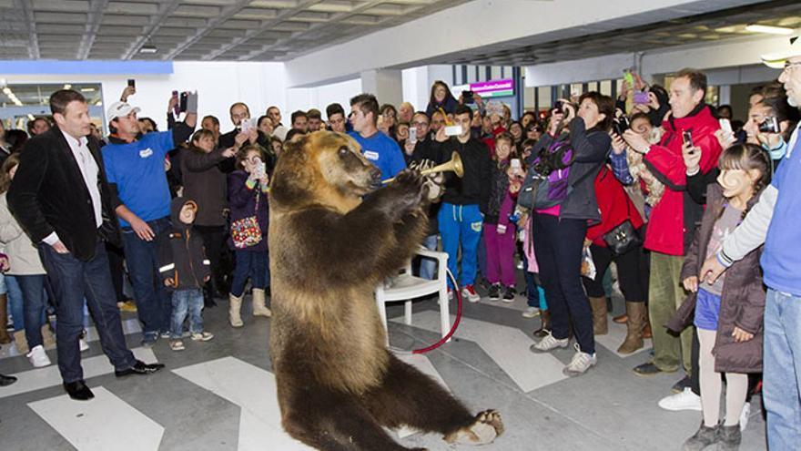 La osa Tima, que apareció en la primera emisión de 'Vaya Fauna', es uno de los animales más explotados en España. En la foto, tocando la trompeta durante un evento publicitario en un centro comercial
