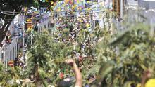 Fiesta de La Rama en Agaete.