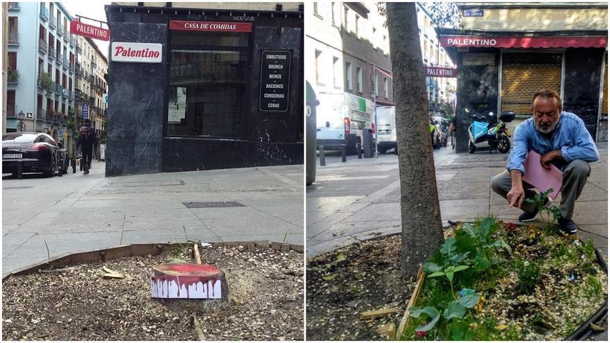 A la izquierda, acción que denuncia la tala del árbol. A la derecha, imagen de archivo en la que aparece Juan Pérez, 'el jardinero de Pez', junto al desaparecido almez | SOMOS MALASAÑA
