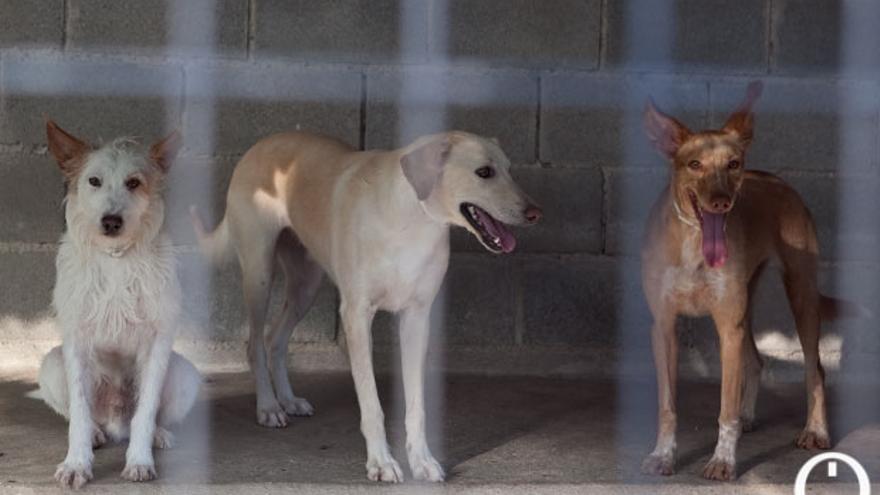 Tres perros alojados en las antiguas instalaciones del Arca de Noé.    MADERO CUBERO