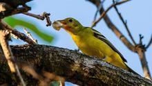 Fotografía fechada el 19 de marzo de 2019, que muestra a diferentes especies de aves en bosques del estado de Colima (México).