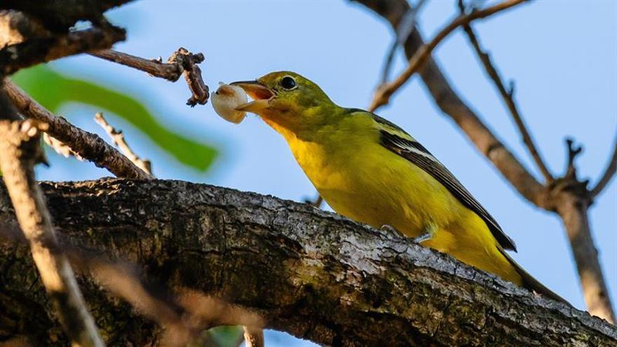 Un estudio científico alerta de la creciente extinción de los animales vertebrados