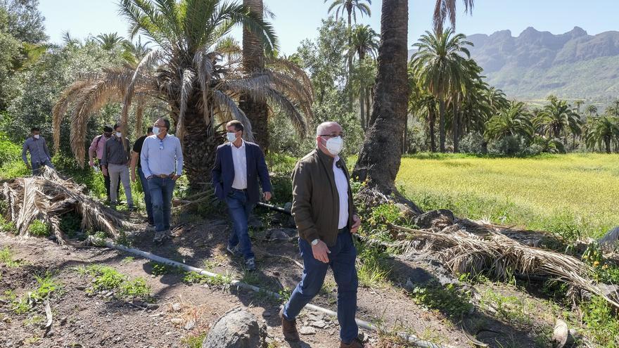 El Cabildo de Gran Canaria invierte 1,2 millones de euros para reducir el combustible vegetal y frenar el avance de los incendios