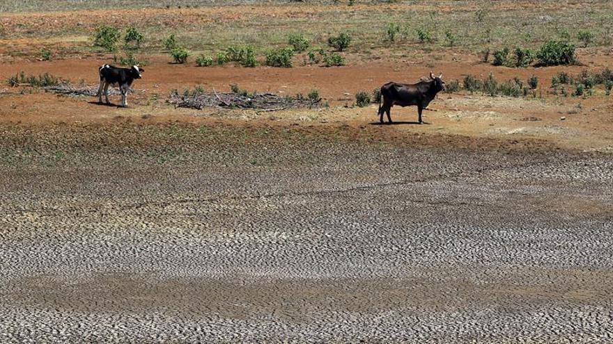 Llenando cubos y con vacas flacas, Cuba vive la peor sequía del último siglo