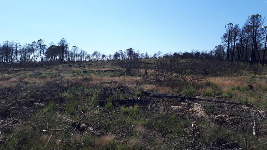 Zona afectada por el incendio de Barchín del Hoyo (Cuenca), un año después del incendio