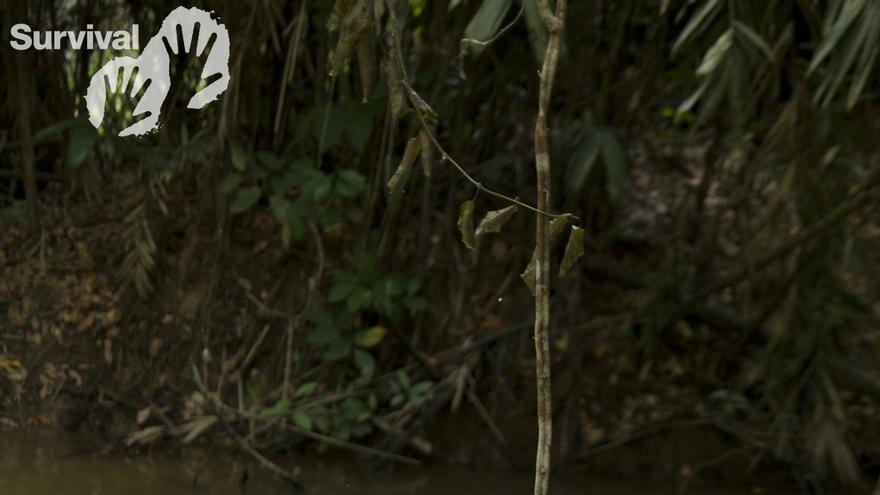 Cinco días les llevó a las mujeres y niños cabalgar desde una comunidad mapuche de Primer Corral, en Chile, a través de los ríos Puelo y Manso, hasta Puerto Varas, en el sur del país. Conocidas como Mujeres Sin Fronteras, el grupo lo conformaban cuarenta mujeres indígenas chilenas, argentinas y mapuches. El suyo fue un viaje de protesta; cabalgaban para denunciar la construcción de represas en la cuenca de Puelo-Manso, que comparten Chile y Argentina.  Somos mujeres de este valle que estamos preocupadas por la destrucción de nuestras comunidades y del medio ambiente, dijo María Isabel Navarrete, presidenta de Mujeres Sin Fronteras. Queremos defender nuestras tradiciones, nuestra tierra y el futuro de nuestros hijos./ ©Loreto Panitao