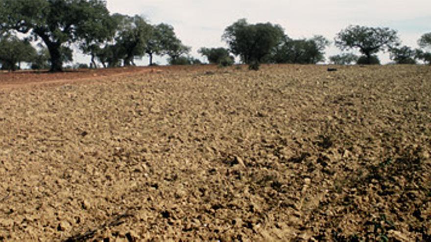 Los pequeños agricultores dicen que los presupuestos de 2015 ''mantienen el abandono al campo''