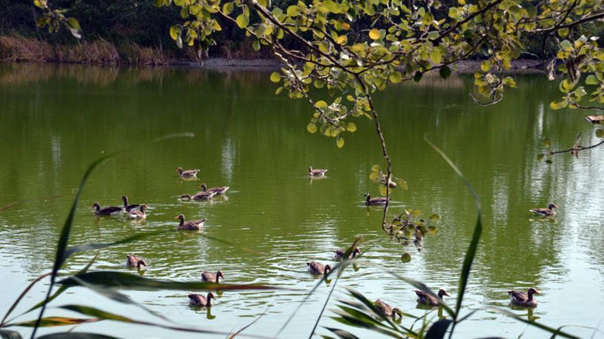 Reserva ornitológica Azuqueca de Henares
