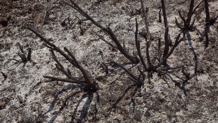 Controlado el incendio en Ribafrecha (La Rioja), con 6 hectáreas quemadas