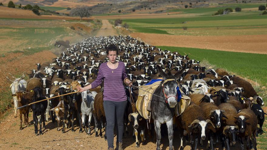 Beatriz Hernández dirige su rebaño de cabras en Algar de Mesa (Guadalajara)