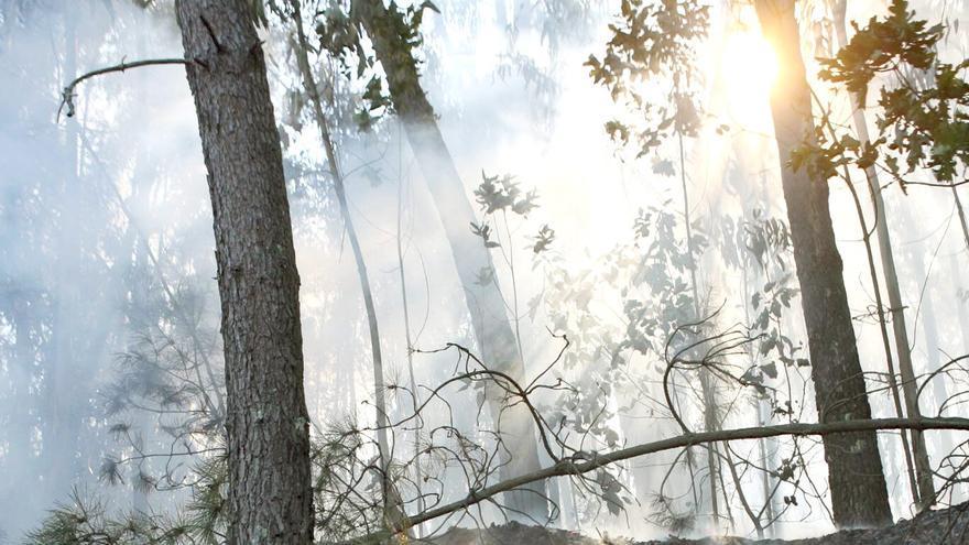 El Presidente del PPdeG Alberto Nuñez Feijoo, cogió               la manguera para ayudar a sofocar un fuego que se acercaba               a una casa en Cabeza de Boi (aldea del concello de Meis),               el 8 de agosto de 2006