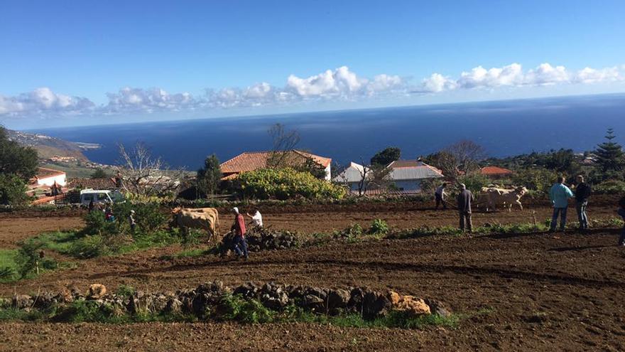La siembra tradicional se desarrolló en San Isidro, en Breña Alta. Foto: JONATHAN FELIPE.