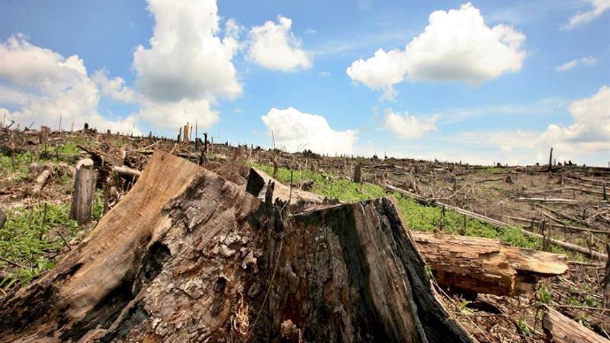 La agricultura comercial genera casi el 70 % de la deforestación en América Latina, dice la FAO