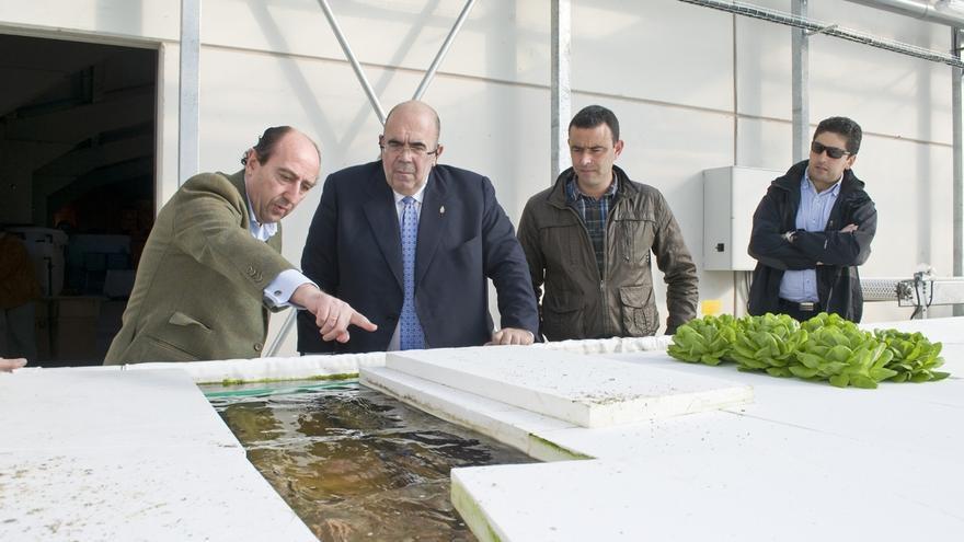El invernadero hidropónico de lechugas produce 1.500 unidades diarias con previsión de llegar a 6.000