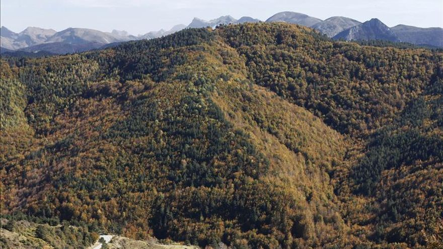 Forestal-fiscales-atraer-inversion-montes_ediima20150602_0280_3
