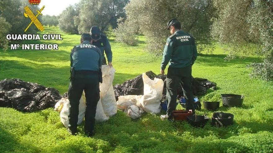 Detienen a 17 personas por su presunta relación con el robo de aceitunas en Almonte e Hinojos
