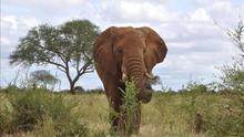 Un elefante en la sabana africana