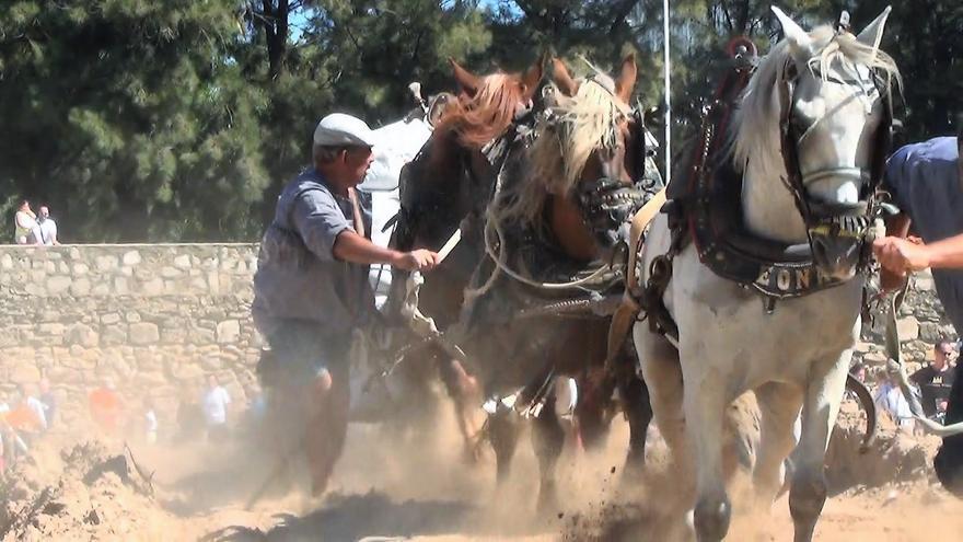 Unos caballos participan en una competición de tiro y arrastre