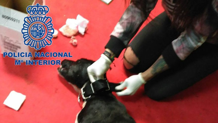 Uno de los perros rescatados por la Policía