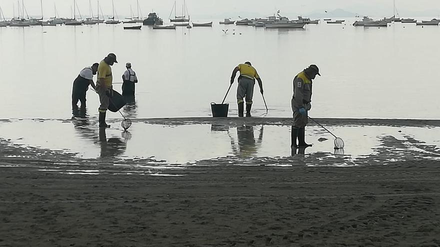 En la mañana del lunes continuaban las labores de recogida de peces muertos en la costa de San pedro del Pinatar