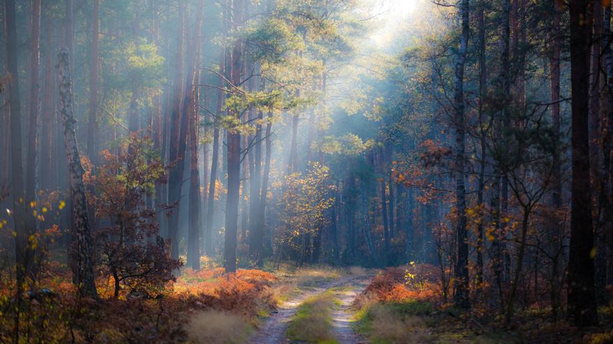 La mitad de las especies de árboles están amenazadas