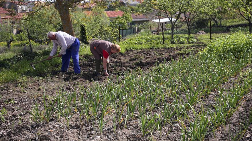 Los agricultores esperan la subida del IVA con temor por la caída del consumo