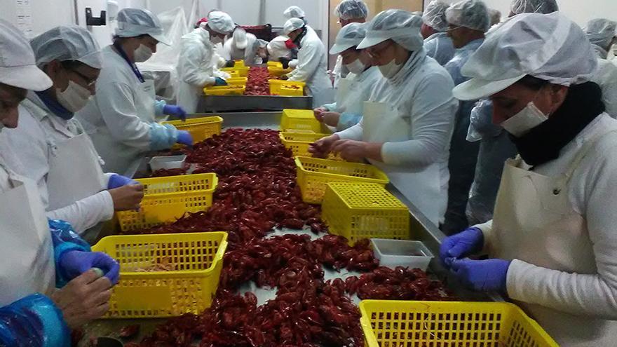 Trabajadores en un vivero de cangrejo rojo en Isla Mayor./ Foto: Juanmi Baquero