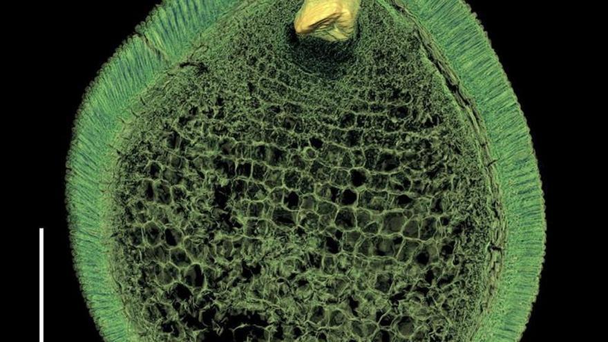 Las primeras plantas con flores eran pequeñas y vivían poco tiempo