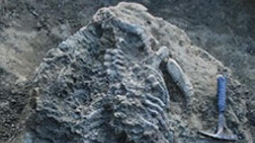 Restos de 'Paludidraco' durante su extracción en El Atance