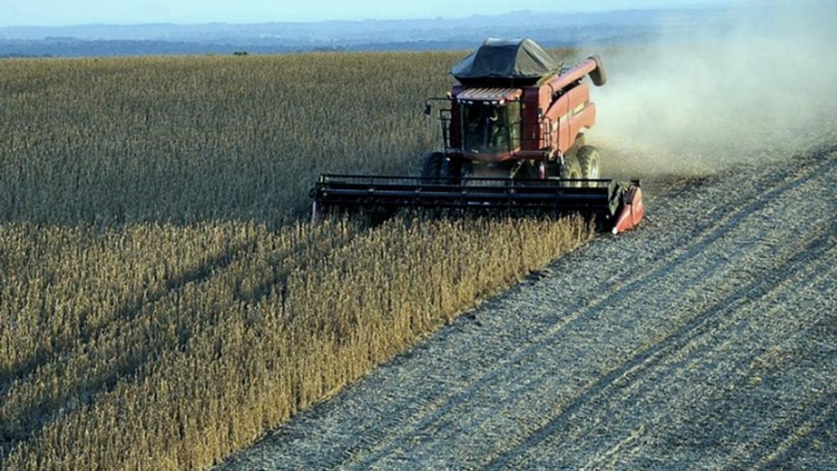 Se prevé que la Argentina mantenga el primer puesto en exportaciones de aceite y harina de soja durante el período 2020-2021.