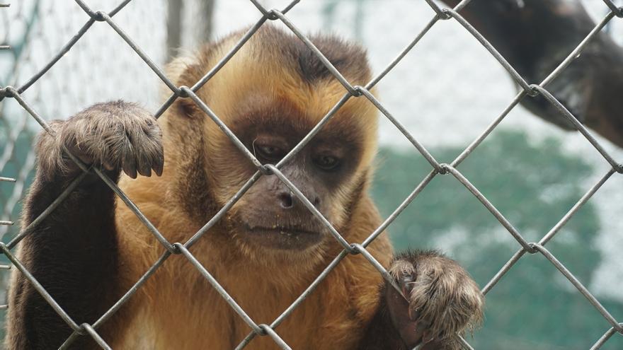 Pese a que en Bolivia no hay nadie que esté en la cárcel por tráfico de fauna, las cárceles de animales están llenas