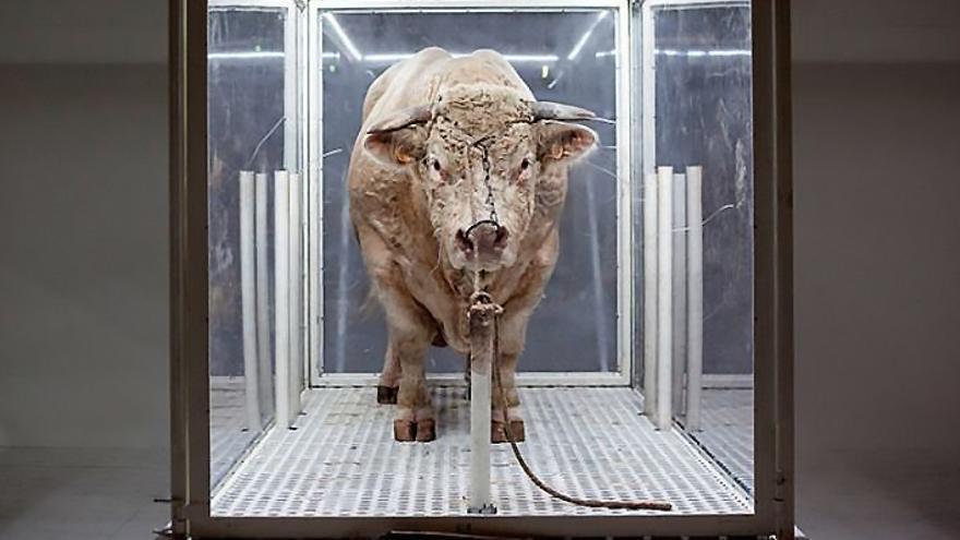 Easy Rider, el toro que ha traído la polémica al Teatro Real de Madrid