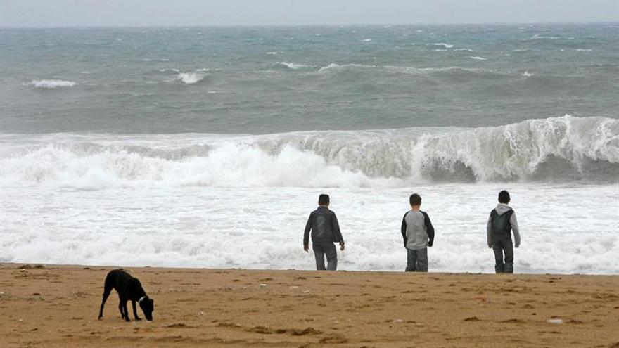 Barcelona creará una zona de playa para perros en la temporada de baño