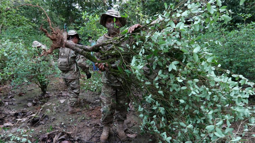 Bolivia erradicó 3.262 hectáreas de cultivos de hoja de coca hasta julio