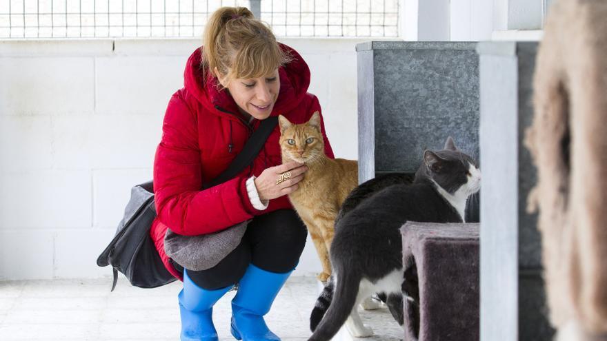 Nathalie Seseña con algunos de los gatos que esperan adopción en la SPAP. Foto: Emilio Cuenca / elfotografodeperros.com