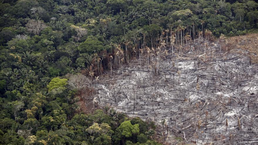 La Amazonía perdió 2,3 millones de hectáreas en 2020, su tercer peor registro