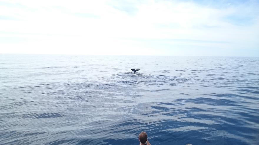 En la imagen, un excursionista contempla la cola de un cachalote.