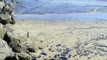 Retiran el chapapote de las playas afectadas por el vertido en Gran Canaria