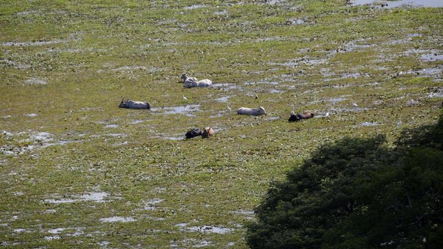 Humedales, el ecosistema menos valorado que Costa Rica quiere recuperar