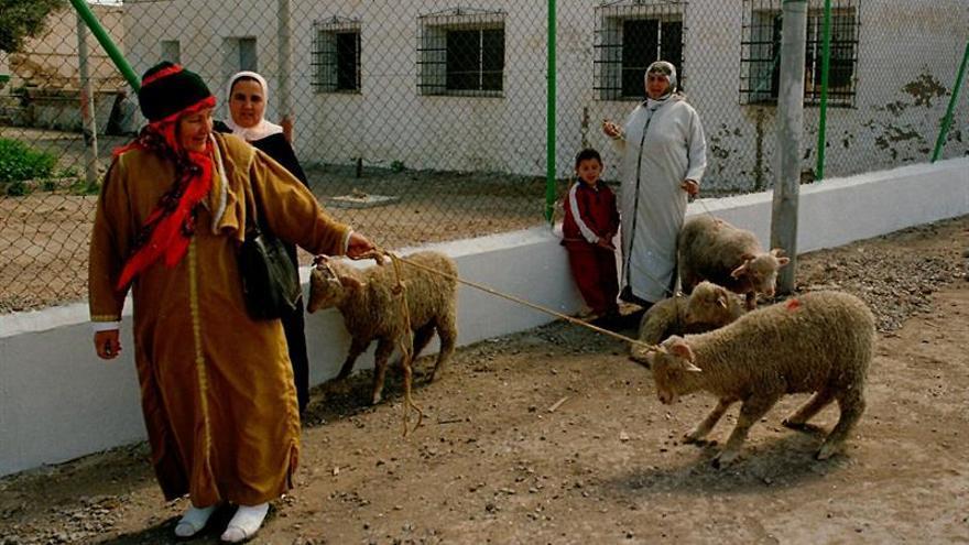 Marruecos prohíbe el reparto benéfico de corderos ante la cercanía de las legislativas