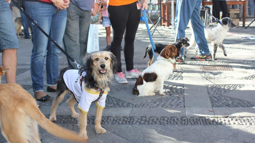 Varias mascotas acudieron a Expoanimalia.