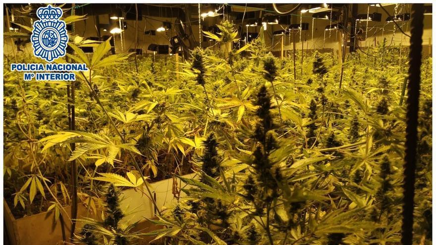 Desmantelan dos plantaciones de marihuana en Pardines y detienen a 4 personas