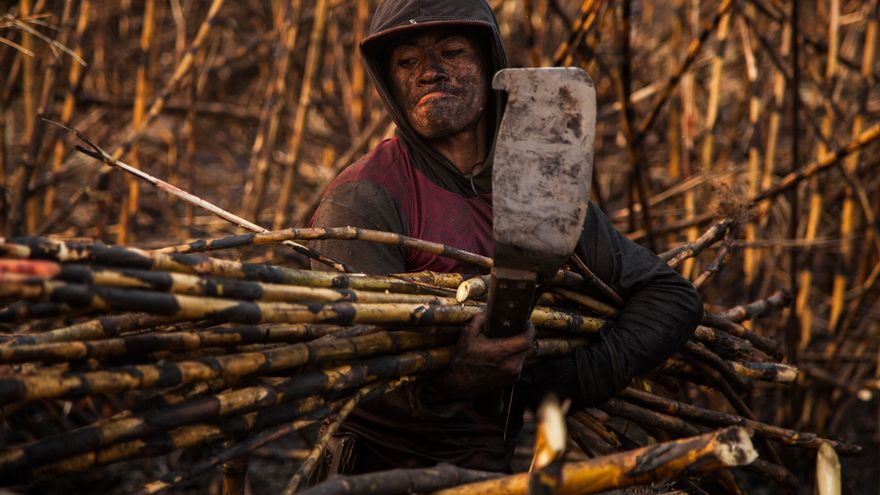 Un agricultor en una plantación de azúcar en Guatemala. | FOTO: Víctor Peña (El Faro/ La Tierra Esclava).
