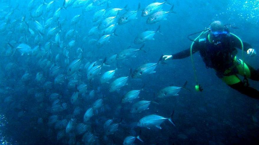 Los cambios en las temperaturas de los océanos supondrá un cambio en los habitats de las especies marinas.
